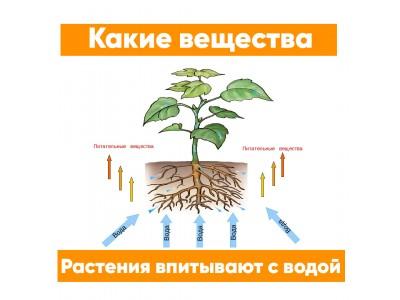 Какие вещества растения впитывают с водой?