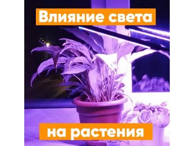 Влияние света на растения