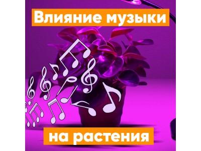 Влияние музыки на растения