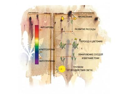 Влияние света на развитие растений